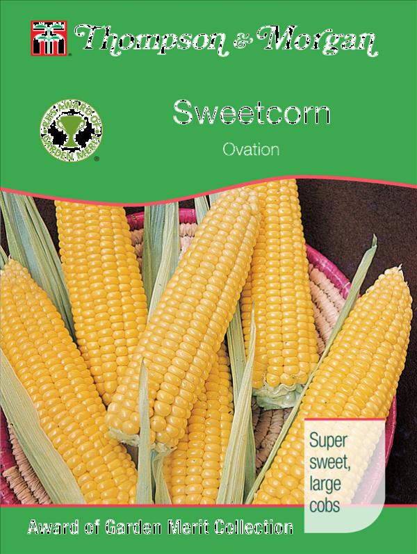 Sweetcorn Ovation F1
