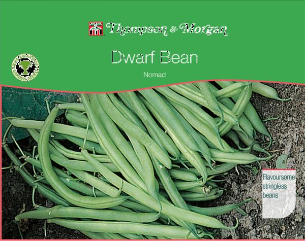Dwarf Bean Nomad