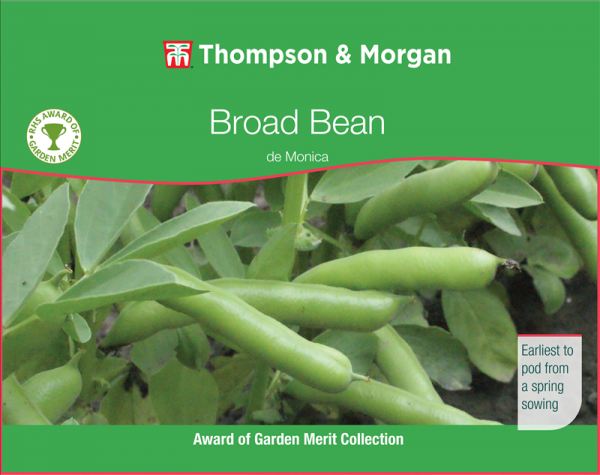 Broad Bean de Monica.