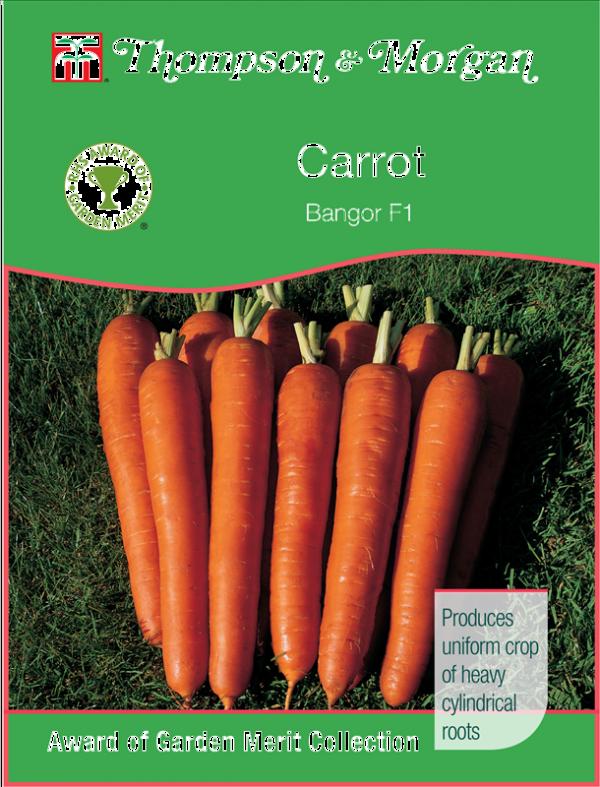 Carrot Bangor