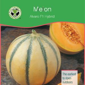 Melon Alvaro F1