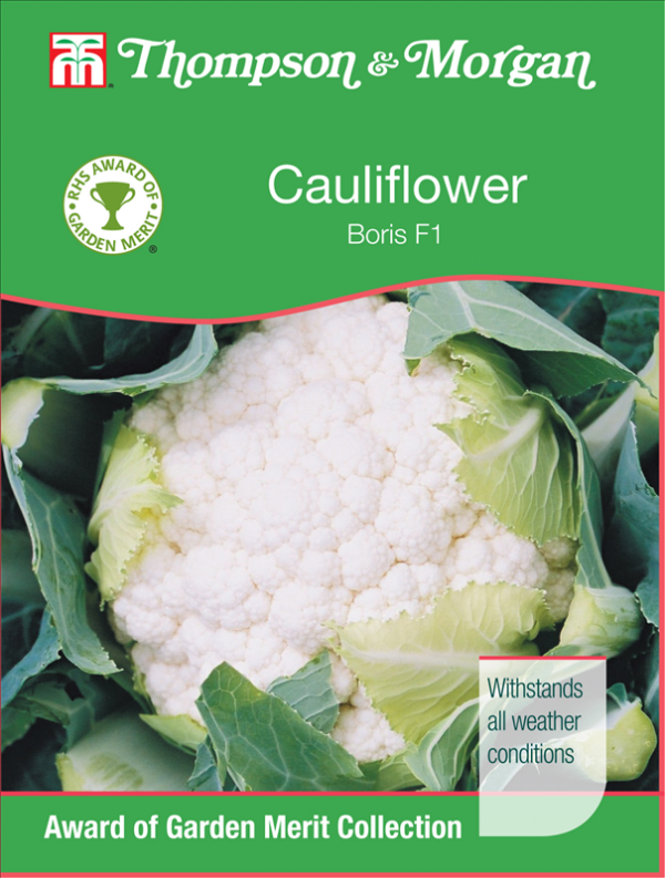 Cauliflower Boris F1