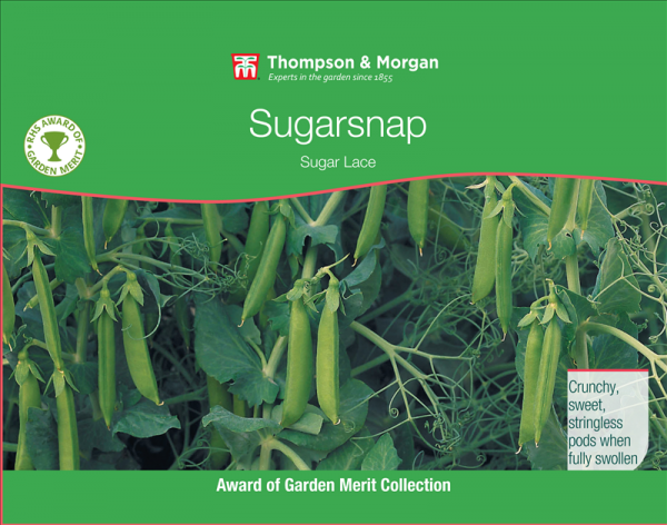 Mangetout Pea Sugar Lace