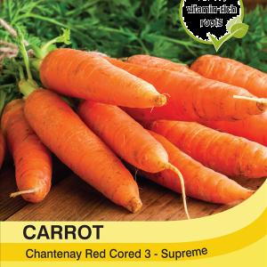Carrot Chantenay Red Cored 3
