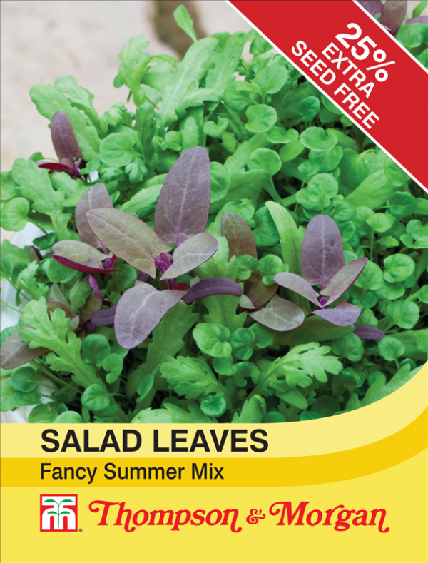 Salad Leaves - Fancy