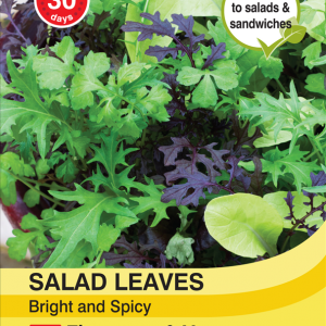 Salad Leaves - Bright & Spicy