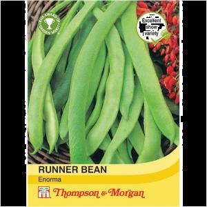 Runner Bean Enorma
