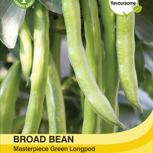 Broad Bean Green Longpod