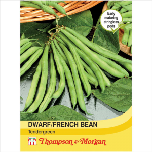 Dwarf Bean Tendergreen