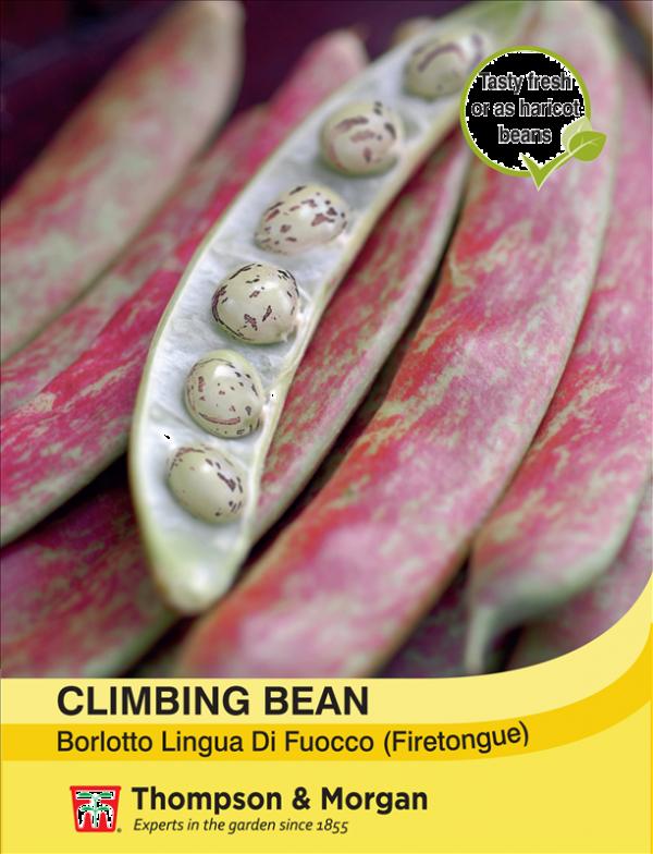 Climbing Bean Borlotto