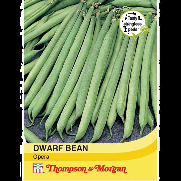 Dwarf Bean Opera