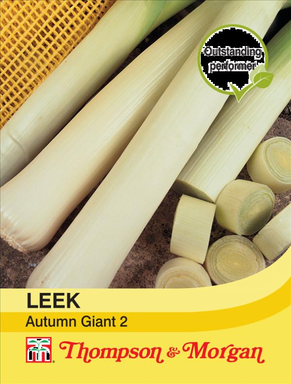 Leek Autumn Giant 2