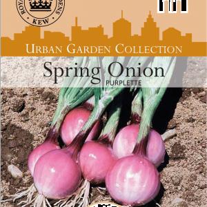 Spring Onion Purplette