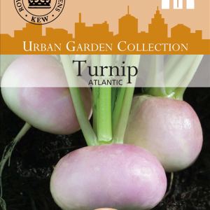 Turnip Atlantic