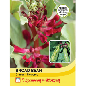 Broad Bean Crimson