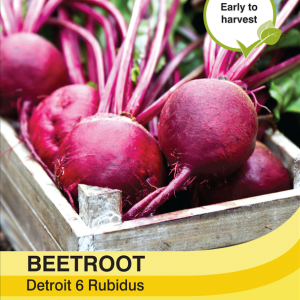 Beetroot Detroit 6 Rubidus