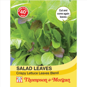 Salad Leaves - Crispy