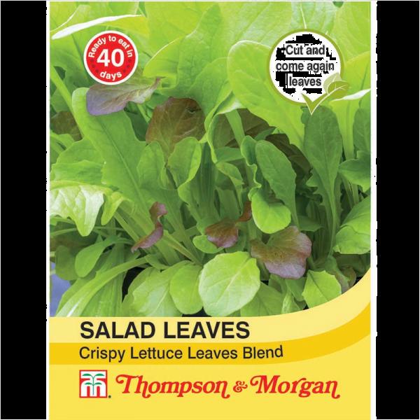 Salad Leaves - Crispy
