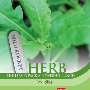 Herb Wild Rocket Wildfire