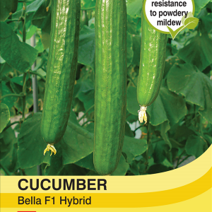 Cucumber Bella F1