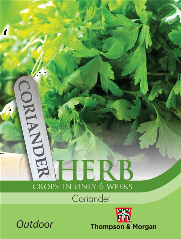 Herb Coriander