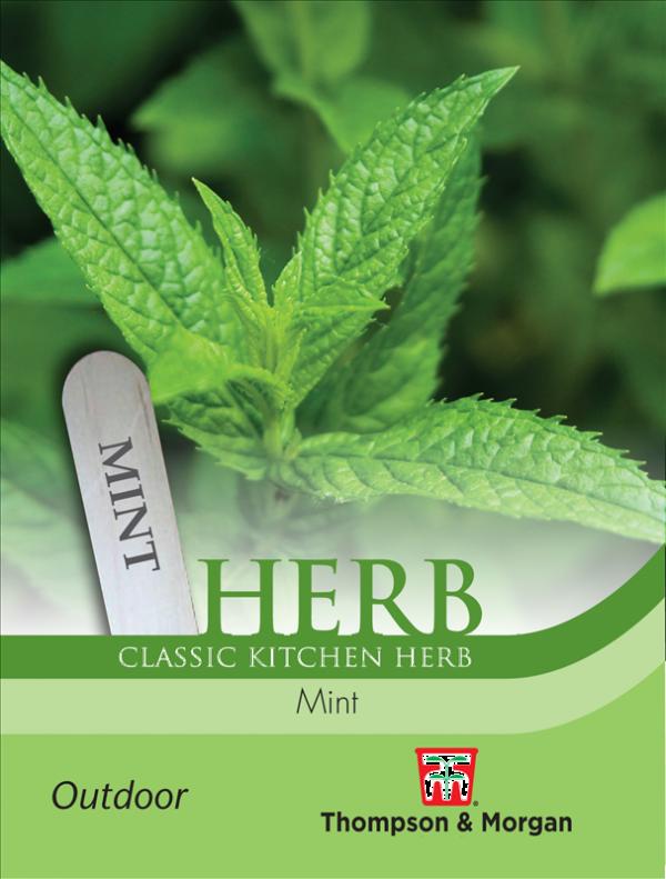 Herb Mint (Peppermint)