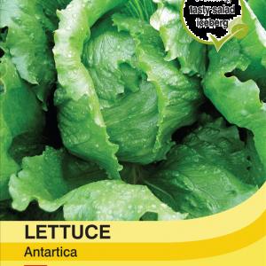 Lettuce Antartica