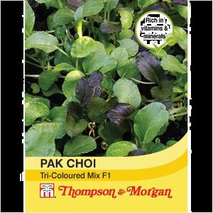 Pak Choi Tricoloured Mix