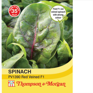 Spinach PV1390 Red