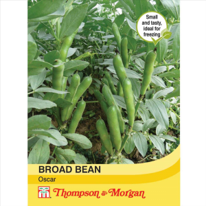 Broad Bean Oscar