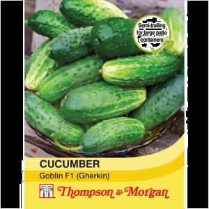 Cucumber Goblin F1