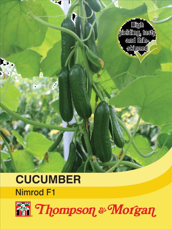 Cucumber Nimrod F1