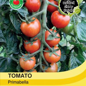 Tomato Primabella