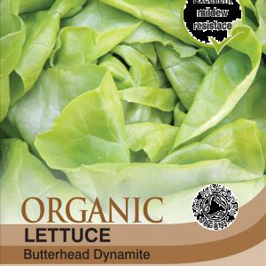 Lettuce Sylvesta  (Organic)