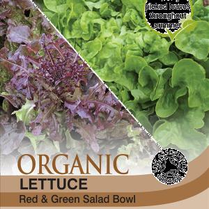Lettuce Salad Bowl (Organic)