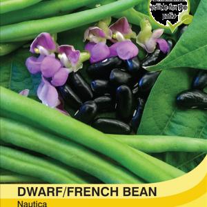 Dwarf Bean Nautica