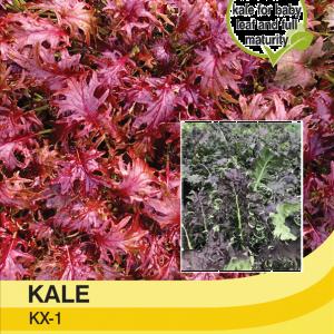 Kale KX -1