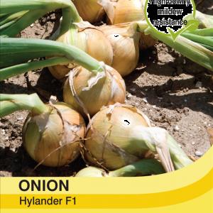 Onion Hylander F1