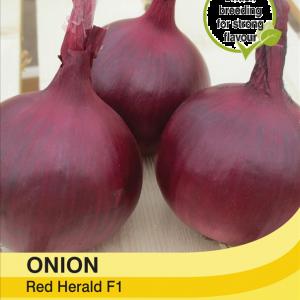 Onion Red Herald