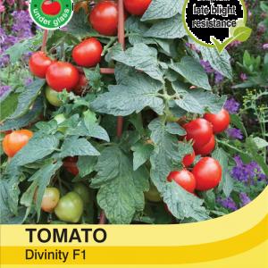Tomato Divinity