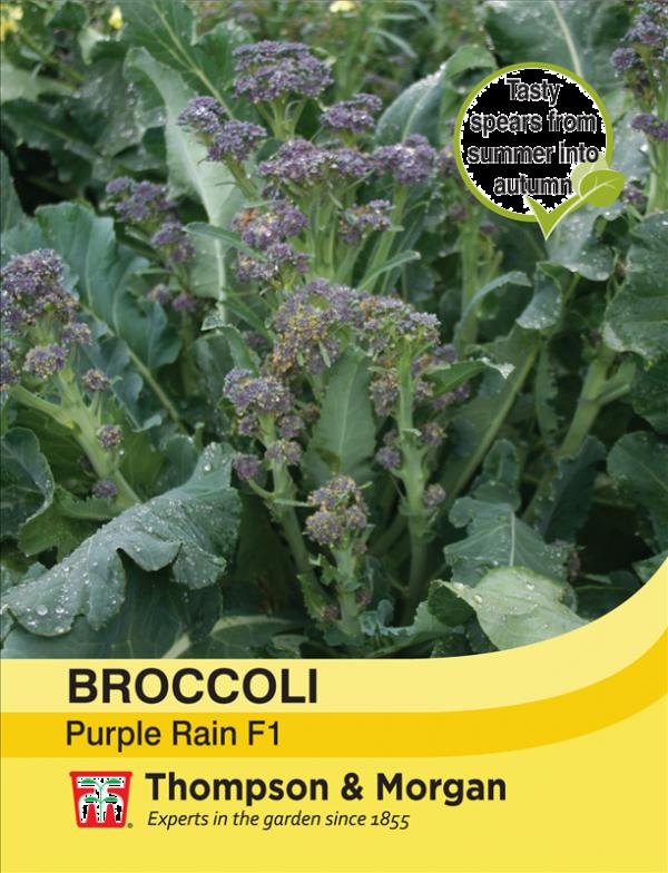 Broccoli Purple Rain F1