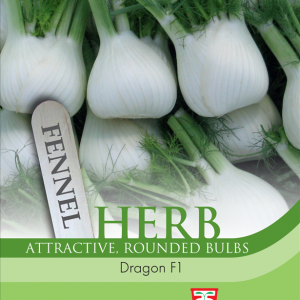 Herb Fennel Dragon F1