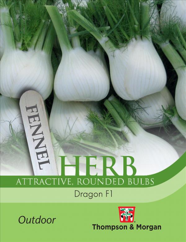 Herb Fennel Dragon F1