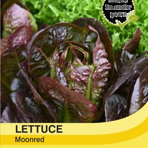 Lettuce Moonred