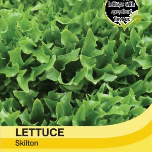 Lettuce Skilton