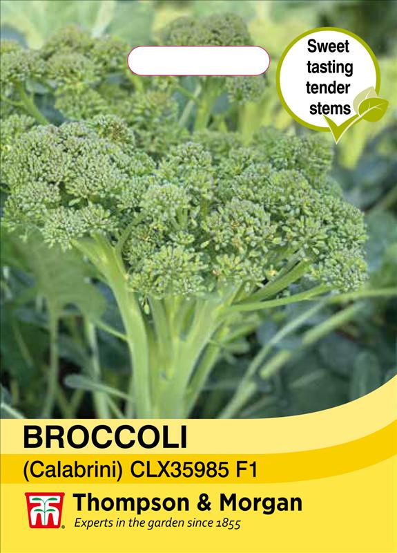 Broccoli calebrini