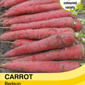 Carrot Redsun