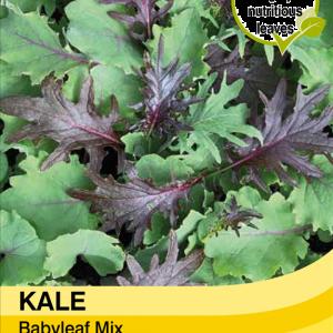 Kale Babyleaf Mix