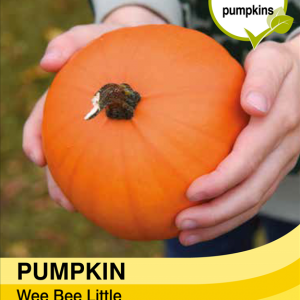 Pumpkin Wee Bee Little