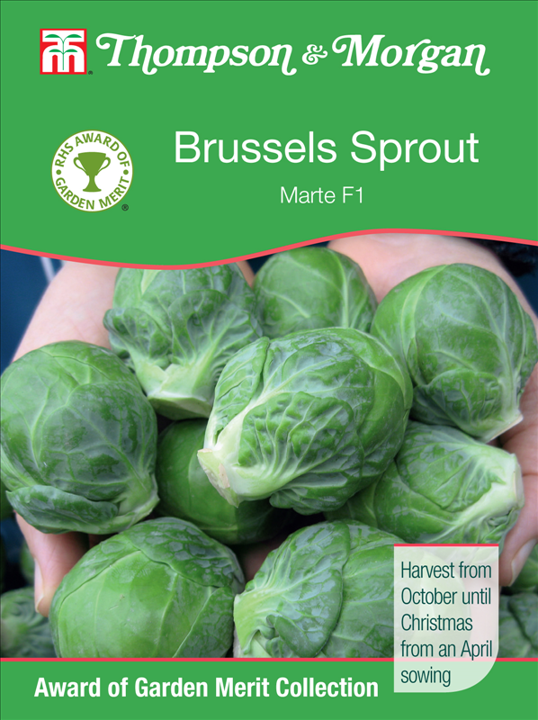 Brussels Sprout Marte F1